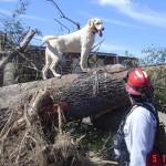 Bandit working after the Tuscaloosa, Alabama Tornado
